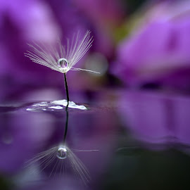 Reflection by Benny Irawan S. Duna - Abstract Water Drops & Splashes