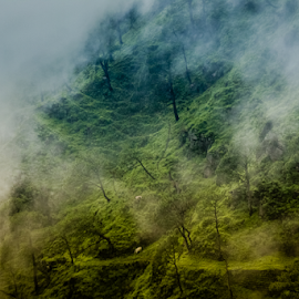into the clouds by Abhijeet Frost - Landscapes Mountains & Hills ( clouds, hills, rainy, cold, fog, kasauli )