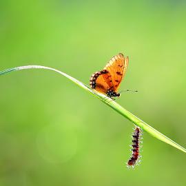 by Sandi Nopri yanto - Animals Insects & Spiders
