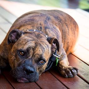Feeling a little sad by Esther Visser - Animals - Dogs Portraits (  )