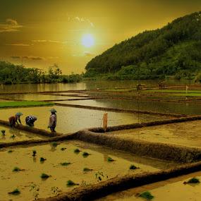 planting rice by Ymmot Davinci - Landscapes Sunsets & Sunrises