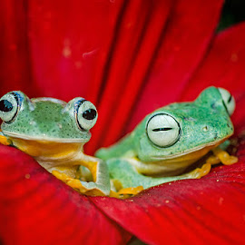 by Dikky Oesin - Animals Amphibians