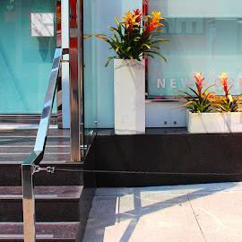 Entrance by Ronnie Caplan - Buildings & Architecture Other Exteriors ( railing, reflection, silver, white, door, steps, shadows, flower box, streetscene, window, brown, flowers, black )