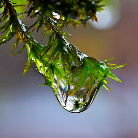 Moss on a Rainy Day by Joan Rankin Hayes - Nature Up Close Natural Waterdrops ( water, macro, nature, moss, drops, rain )