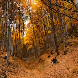 The fall by George Nutulescu - Landscapes Forests