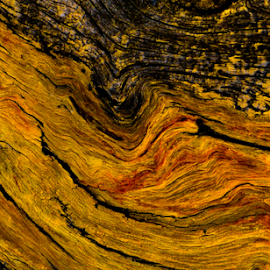Gnarled tree by Del Candler - Abstract Patterns ( red, wood, swirl, grain, knot, tan )