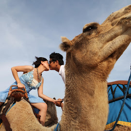 Camel Kiss by Arif Murti - People Couples ( kiss, romantic,  )
