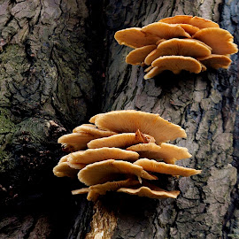 by James Blyth Currie - Nature Up Close Mushrooms & Fungi