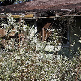 Forgotten by Brenda Hooper - Buildings & Architecture Homes ( belongings, home, falling, weeds, house, abandoned,  )