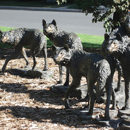 wolves by Dennis Hockabout - City,  Street & Park  City Parks ( bronze, outdoor public, wolves )