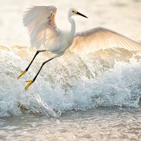 by David Savoie - Animals Birds