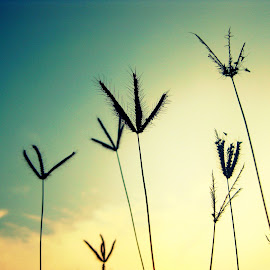 Grass by Rajarajan Kamban - Nature Up Close Other plants ( plant, sky, nature, grass )