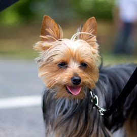 happy dog by Christopher Wu - Animals - Dogs Puppies