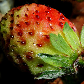 Strawberry by Vanalapha Chuasritrakul - Nature Up Close Gardens & Produce (  )