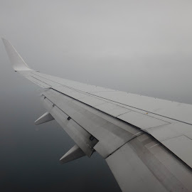Whiteout by Pamela Howard - Transportation Airplanes ( wing, plane, aircraft, white, cloud )