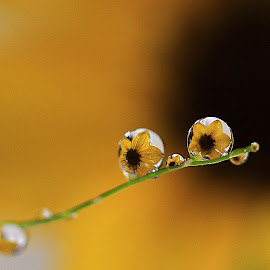 by Carsim Novianto - Nature Up Close Natural Waterdrops