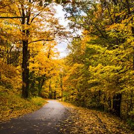 Fall by Laimis Urbonas - Nature Up Close Trees & Bushes ( lake geneva, fall leaves, fall colors, fall collage, colors, fall, trees, forest, woods, color, colorful, nature )