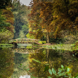 Bridge by Dan Orsa - Landscapes Waterscapes ( water, waterscape, autumn, green, trees, forest, bridge, leaves )
