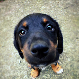 Have something to eat? by Milena Žbogar - Animals - Dogs Puppies ( doggie, dog portrait, puppy, close up, eyes )