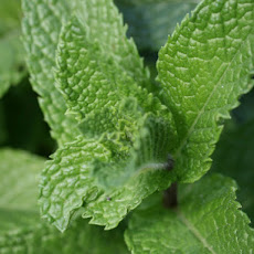Mint and Green Chile Granita