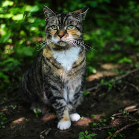 Adventurer by John Lee - Animals - Cats Portraits ( hunter, cat, nature, crisp, gorgeous, elegant, fuzzy, furry, outdoors, cute, soft )