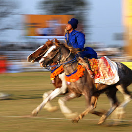 Double Horse Rider by Rakesh Syal - News & Events Sports
