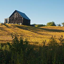 by Patricia Zollmann-Kissinger - Landscapes Prairies, Meadows & Fields ( field, barn, grasslands, farmland, country )