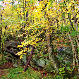 by Delores Mills - Nature Up Close Rock & Stone ( rock cliff, fall colors, nature )