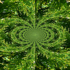 Tree Circles by Linda Blevins - Abstract Patterns ( colorful, green, pretty )
