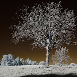 Golden World by Lorenzo Di Candia - Nature Up Close Trees & Bushes ( ir, infrared, infrarosso )