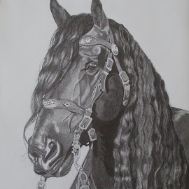 The Wizzard by Marilyn Brown - Drawing All Drawing ( stallion, wizzard, friesian, the, black )