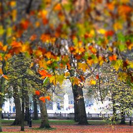 Autumn in Green Park, London by Steve Cooke - City,  Street & Park  City Parks (  )