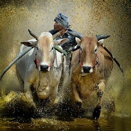 Struggled by Pimpin Nagawan - Sports & Fitness Rodeo/Bull Riding