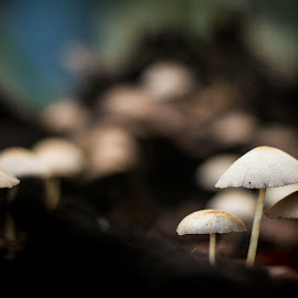 mushrooms by Rudi Alfian - Nature Up Close Mushrooms & Fungi ( up close, macro, nature, mushrooms )