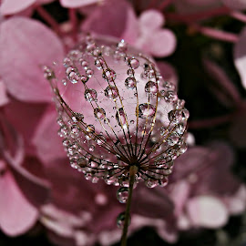 Pink Symphony by Marija Jilek - Nature Up Close Natural Waterdrops