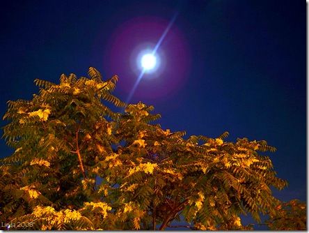 The moon over a tree