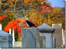 Yantic Crow