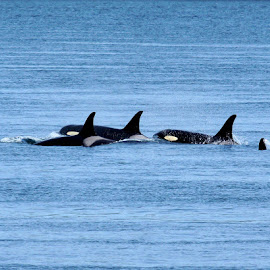 four by Brian Goldberg - Animals Sea Creatures (  )