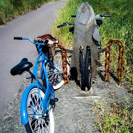 by Dale Versteegen - Transportation Bicycles