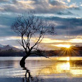 Sunrise by Winkie Chau - Landscapes Sunsets & Sunrises ( tree, lanscape, shine, lake, sunrise,  )