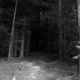 B&W forest by Martin Thomson - Landscapes Forests ( dark, white, forest, dense, black, black and white, b&w, landscape,  )