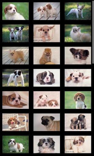 【免費書籍App】ipiks Love dogs 1 -Happy Puppy-APP點子