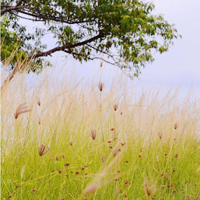 Rerumputan.. by Dwi Ratna Miranti - Nature Up Close Leaves & Grasses