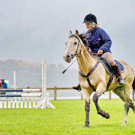 Equestrianism  by Winkie Chau - Sports & Fitness Other Sports ( queenstown, equestrianism, jockey, horse riding, sport,  )