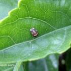 Lady bug - Mariquita