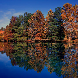 Woodchase Lake by Kenneth Martin - Landscapes Forests ( water, reflection, blue sky, nature, autumn, colorful, fall, trees, lake, vibrant )