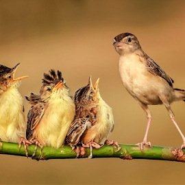 My Family  by Roy Husada - Animals Birds