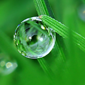 by Fentee  Affandy - Nature Up Close Natural Waterdrops ( macrophotography, grass, nature up close, waterdrops )