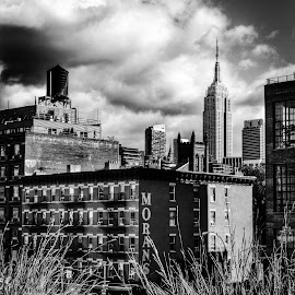 NY by Neil Duffen - City,  Street & Park  Skylines
