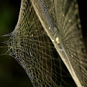 Spider in its complex web